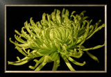 Fuji Mum II Prints by Renee Stramel