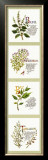 Kitchen Herbs I Posters by G. Phillips