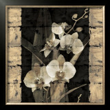 Orchids in Bloom II Prints by John Seba