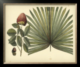 Antique Brazilian Palm Prints by Sir Hans Sloane