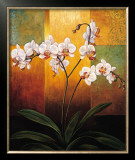 Orchids Prints by Jill Deveraux