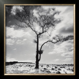 Lone Tree no. 2, Peak District, England Prints by Dave Butcher