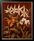 Orchid Trio I Prints by Rodolfo Jimenez