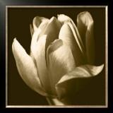 Sepia Tulip II Posters by Renee Stramel