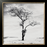 Lone Tree no. 3, Peak District, England Print by Dave Butcher