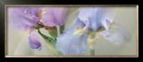 Iris XXII Prints by Huntington Witherill