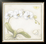 White Orchid Prints by Meg Page