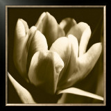 Sepia Tulip I Prints by Renee Stramel