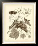 Nature Study in Sepia III Print by Maria Sibylla Merian