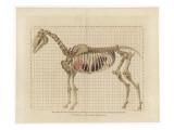 Horse Skeleton Giclee Print