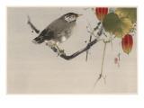 Japanese Print-Starling Giclee Print by Robert Gillmor
