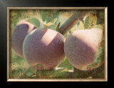 Vintage Apples I Print by Jason Johnson