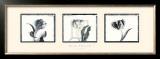 Three Tulips Prints by Bill Philip
