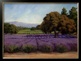 Lavender Fields Art by Susan Hoehn
