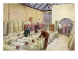 Hop Sampling at Guinness' Brewery in Dublin Giclee Print