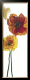 Papaver Nudicaule CV. Prints by Richard Fischer