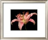 Dream Lilies II Prints by Renee Stramel
