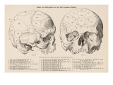 Gall's Phrenological System - the Skull Seen from Side and Front Giclee Print