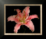 Dream Lilies III Prints by Renee Stramel