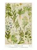 Healing Plants Giclee Print