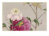 Japanese Print - Moth Giclee Print by Robert Gillmor