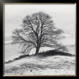Misty Tree, Peak District, England Prints by Dave Butcher