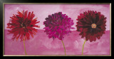 Dahlias Vermillon, Fischia, Carmin Prints by Valerie Roy