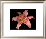 Dream Lilies III Print by Renee Stramel