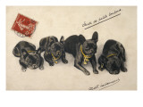French Bulldogs Giclee Print