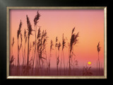 Fenland Sunrise Prints by Rod Edwards