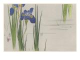 Japanese Print - Iris Giclée-Druck von Robert Gillmor