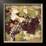 Vintage Grape Vines II Prints by Jason Johnson