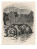 Greyfriars Bobby Lying Near the Grave of His Master, John Gray Giclee Print