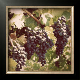 Vintage Grape Vines I Print by Jason Johnson