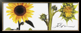 Helianthus Print by JoSon 