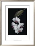Velvet Ladies Prints by Rosemarie Stanford