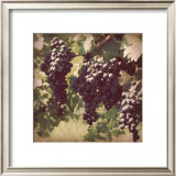 Vintage Grape Vines III Prints by Jason Johnson