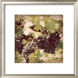 Vintage Grape Vines II Print by Jason Johnson