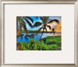 Where Da Coconuts Grow Framed Giclee Print by Randy Jay Braun
