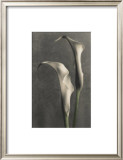Two Lilies II Print by Diane Poinski