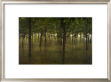 Revitalize: Forest Prints by Sharon Woodruff