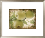 Vintage Apples II Print by Jason Johnson