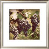 Vintage Grape Vines I Prints by Jason Johnson
