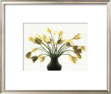 White Tulips Prints by Kevin Summers