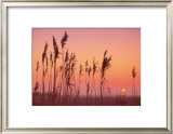 Fenland Sunrise Print by Rod Edwards