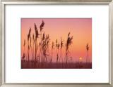 Fenland Sunrise Print by Rod Edwards