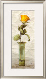 Rose in a Pot IV Prints by Giancarlo Riboli