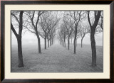 Tunnel of Trees Prints by Monte Nagler