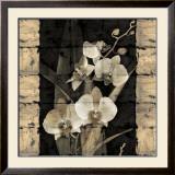 Orchids in Bloom II Poster by John Seba