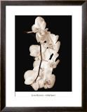 Orchid Dance I Poster by John Rehner